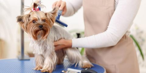 mobile pet grooming coral springs